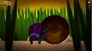 Dung Beetle Derby